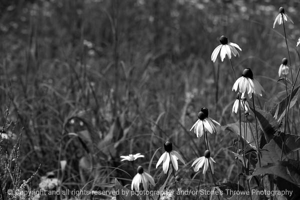 015-flower-wdsm-15jul13-2452