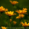 015-flower-wdsm-29jun13-1726