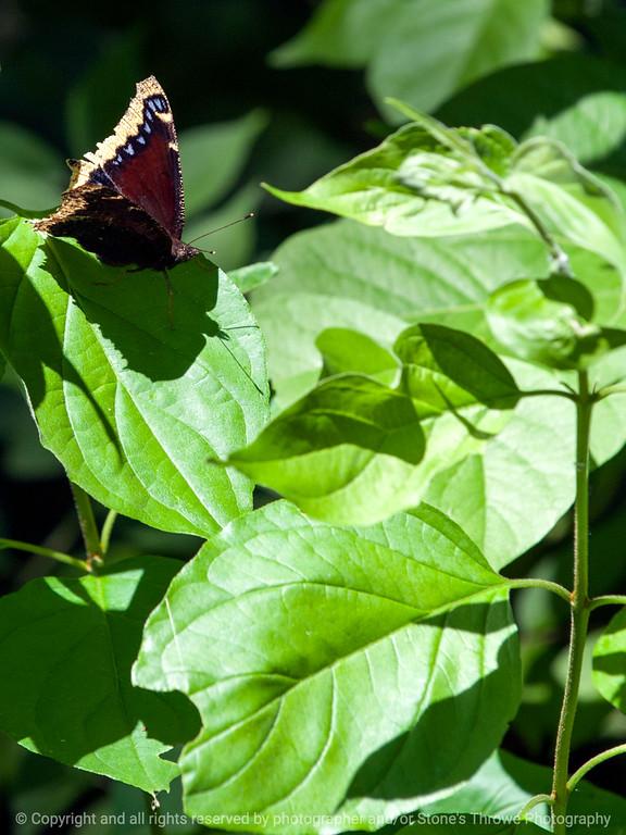 015-butterfly-wdsm-02jul13-1924