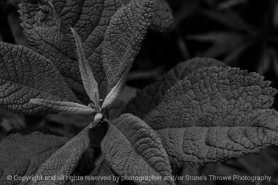 015-botanical-wdsm-16may16-18x12-003-bw-9035