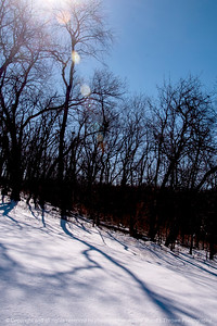 015-shadows_winter-wdsm-27feb14-004-6808