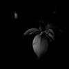 015-leaf-wdsm-23may13-0592
