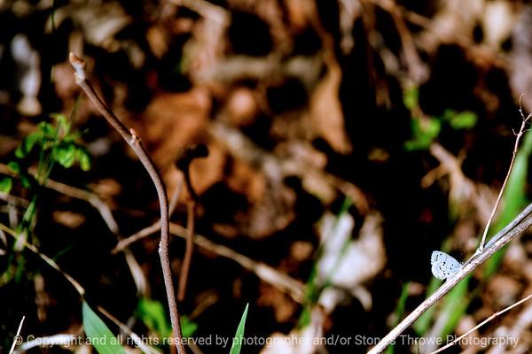 015-butterfly-wdsm-28mar12-4758