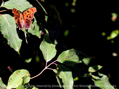 015-butterfly-wdsm-17aug11-002-0181