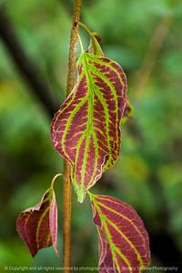 leaf-wdsm-27aug15-12x18-003-4648