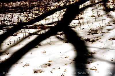 015-tree_shadow-wdsm-14mar13-9892