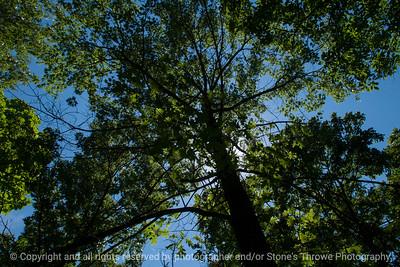 015-sunlight_tree-wdsm-23jun16-18x12-003-0004