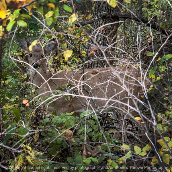 015-deer-wdsm-19oct14-09x09-006-0196
