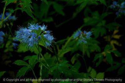 015-flower-wdsm-23may16-18x12-003-9303