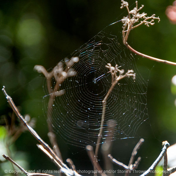015-spider_web-wdsm-30sep13-006-4409