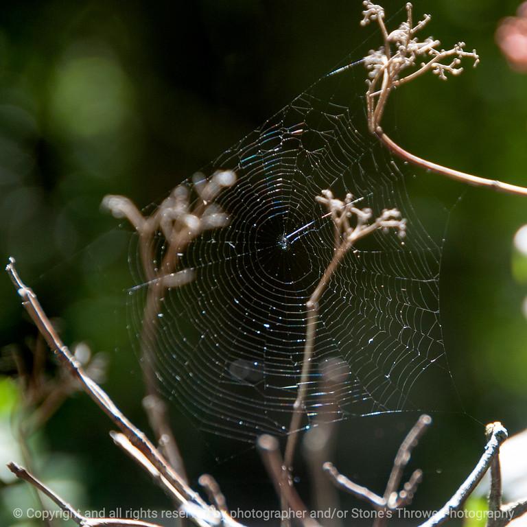 015-spider_web-wdsm-30sep13-006-4409