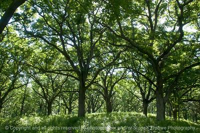 015-forest-wdsm-16jun16-18x12-003-9925