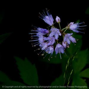 015-flower-wdsm-23may16-09x09-006-9272