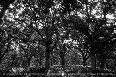 015-forest-wdsm-16jun16-18x12-003-bw-9925