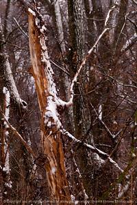 015-tree-wdsm-20feb14-004-6783