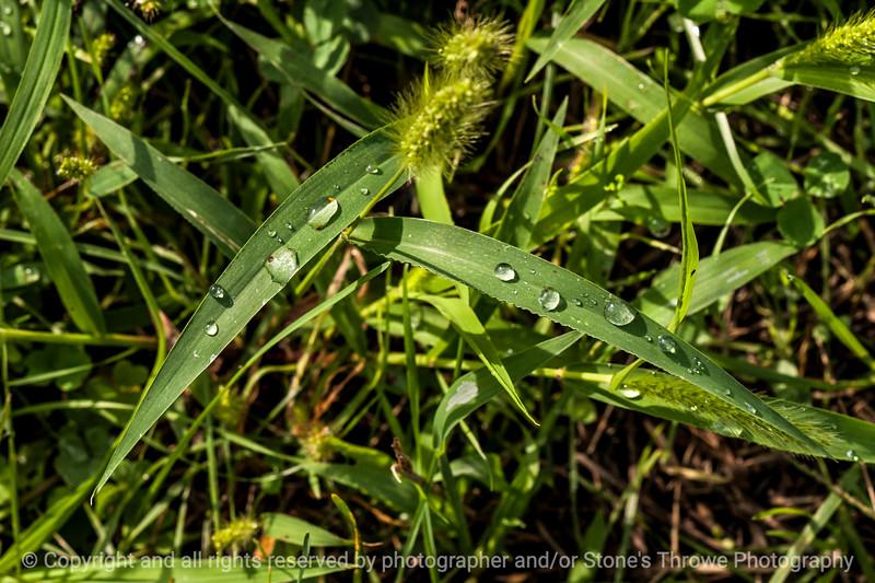 015-grass_water_drops-wdsm-05sep14-003-9341