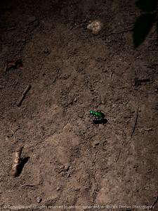 015-insect_green-wdsm-23jun16-09x12-001-0007