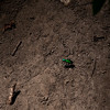015-insect_green-wdsm-23jun16-09x12-001-0007
