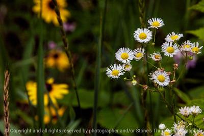 015-flower-wdsm-06jul14-003-1599