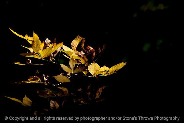 015-leaf_autumn-wdsm-13oct13-5285