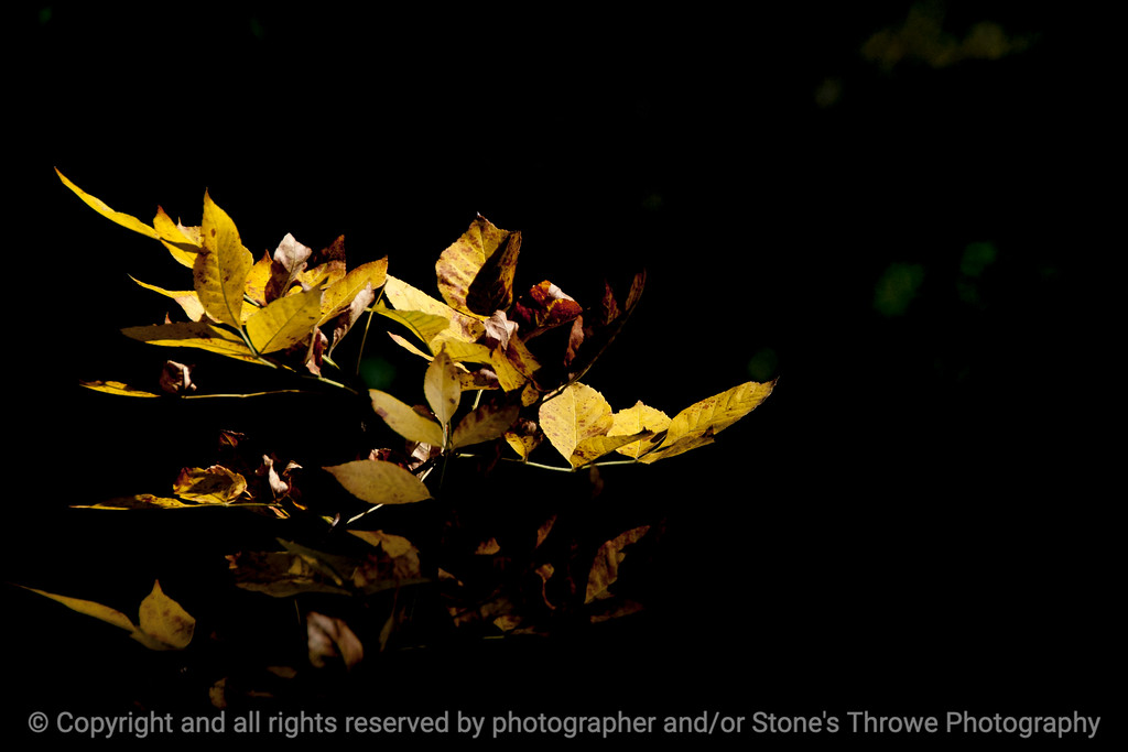 015-leaf_autumn-wdsm-13oct13-5285