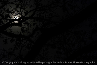 015-sunlight_silhouette-wdsm-28feb17-18x12-033-7974