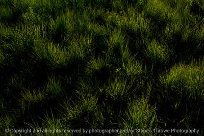 015-grass-wdsm-28jul13-3037
