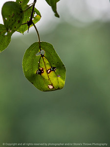 leaf-wdsm-28aug15-09x12-001-4660