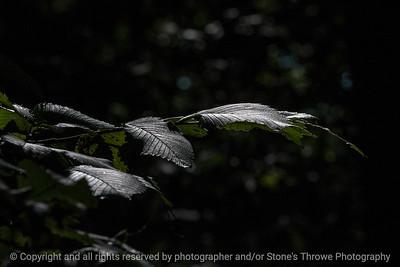 leaf-wdsm-24aug15-18x12-003-4543