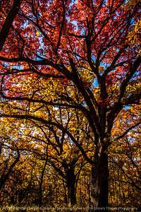 015-trees_autumn-wdm-02nov13-5593