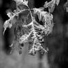 015-leaf_autumn-wdsm-17oct12-001-bw-8863