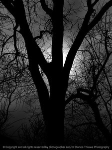 015-tree_detail_silhouette-wdsm-07nov11-001-bw-1945