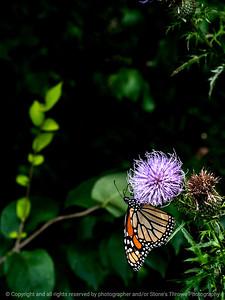 015-butterfly-wdsm-08sep14-09x12-9491
