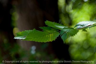 leaf-wdsm-24aug15-18x12-003-4570