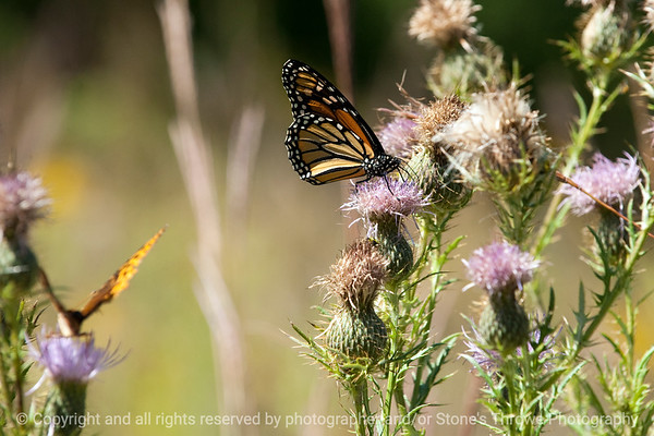 015-butterfly-wdsm-09sep12-003-8000