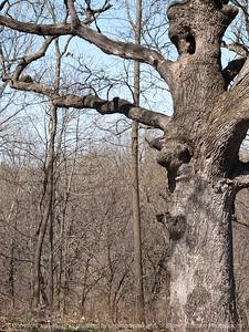 015-tree-wdsm-04apr16-09x12-001-7280