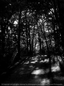 015-shadows-wdsm-26jun13-1579