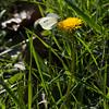 butterfly-wdsm-25sep15-09x12-001-5281