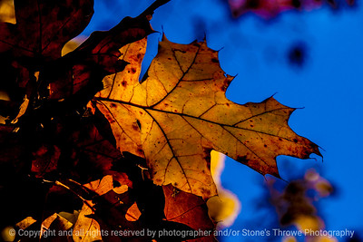 015-leaf_autumn-wdsm-02nov13-5584