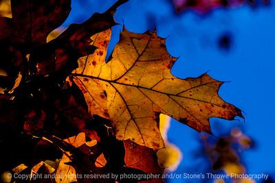 015-leaf_autumn-wdsm-02nov13-5584