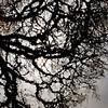 015-tree_reflection-wdsm-28mar12-001-4730