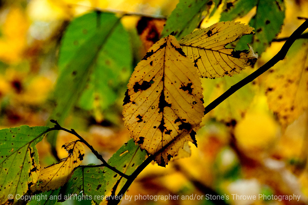 015-leaf_autumn-wdsm-21oct13-003-5371