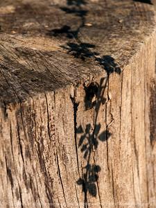 015-shadow-wdsm-25mar12-001-4609