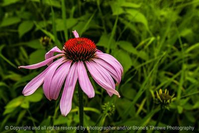 015-flower-wdsm-30jun14-003-8631