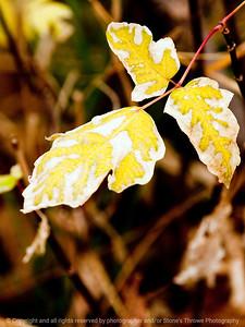 015-leaf_autumn-wdsm-23oct12-001-8895