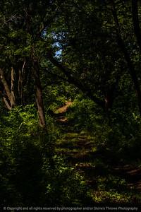 015-forest_path-wdsm-29jul19-08x12-208-500-2280