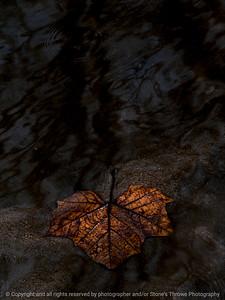 leaf-wdsm-29feb16-09x12-001-6876