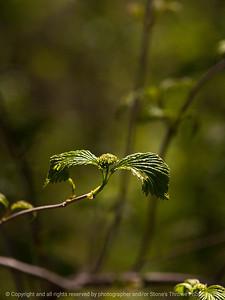 015-leaf-wdsm-12may13-0286