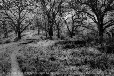 015-woods-wdsm-04may16-18x12-203-bw-8495