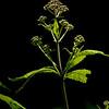 015-botanical-wdsm-29jun13-1713